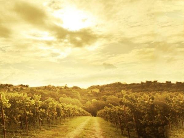 紅酒源產地